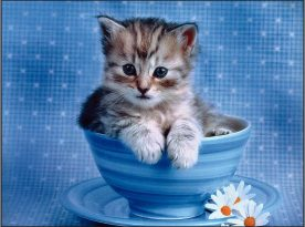 Top 10 Most Wonderful Cute Cats
